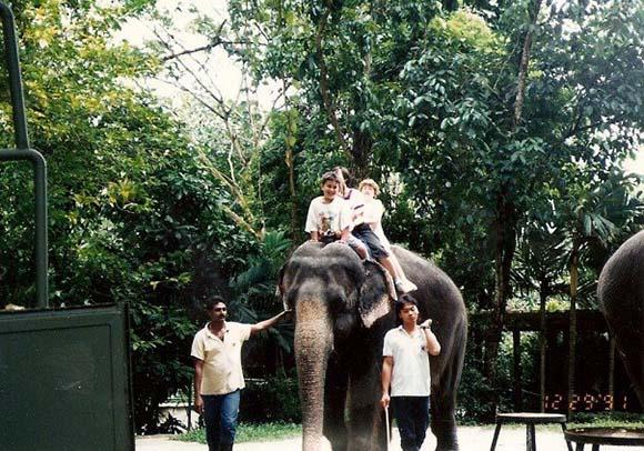 Elephant Singapore