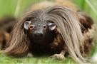Creepy Haggis Creature