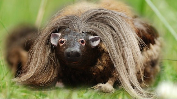 The haggis beast is just something people make up to scare tourists like drop bears or Vegemite.