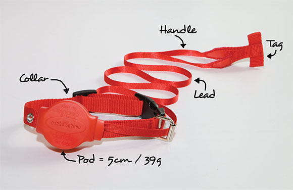 Doddle for Dogs- Dog Leash and Collar