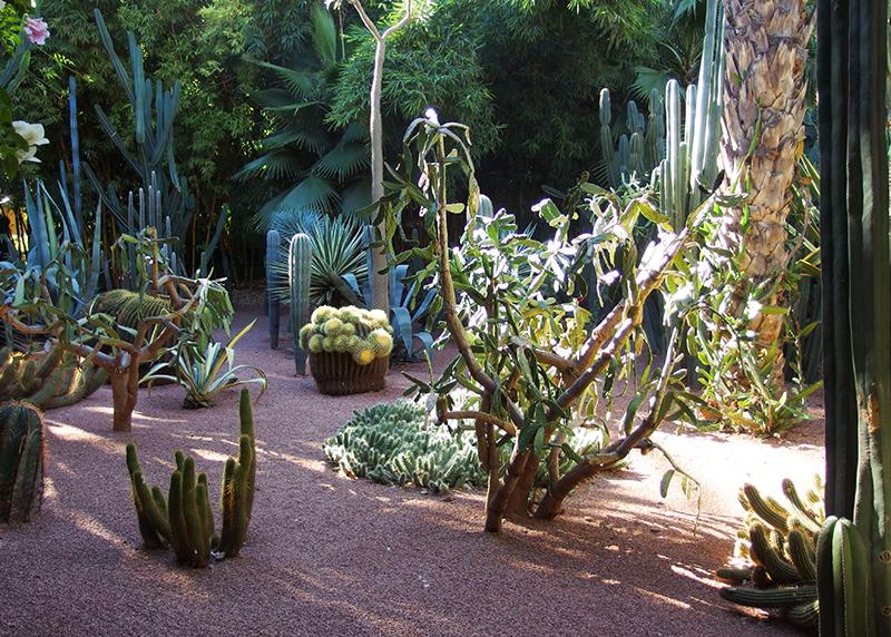 Majorelle Garden - Cacti