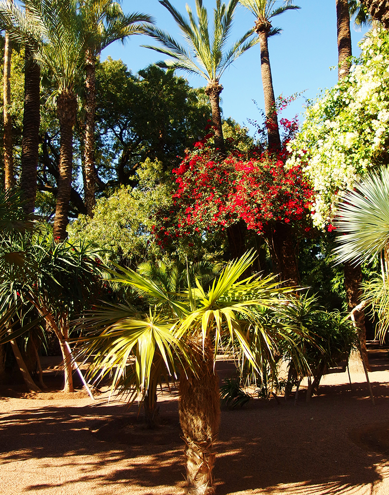 Majorelle Garden - Palm Trees
