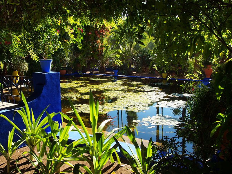 Majorelle Garden - Water Lily Pond